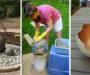 14+ kreativních nápadů na krásné zahradní dekorace z obyčejné sádry! Nádhera!