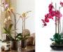 Patříte mezi milovníky orchidejí? 5 osvědčených triků na jejich pěstování! Geniální!
