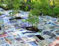 9 praktických tipů od profesionální zahradníka jak se zbavit plevele! Geniální triky!