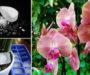Geniální triky, díky kterým Vám kupovaná orchidej pokvete krásně po celý rok!
