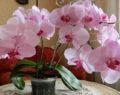 5+ geniálních způsobů jak znovu rozkvést Vaší orchidej!