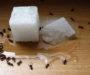 Vyzkoušený trik jak se zaručeně zbavit mravenců ve Vaší domácnosti ve 2 krocích!