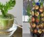 15+ druhu zeleniny a bylinek, které si můžete pěstovat doma na parapetu!