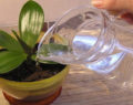 Odkvetla Vám orchidej? Geniální trik od zahradníka jak jí správně zavlažovat!