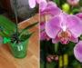 Odkvetla Vám orchidej? Tady je ten nejjednodušší způsob jak jí znovu rozkvést díky banánové slupce!