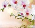 Osvědčené triky jak pečovat o Vaší orchidej, tak aby nikdy nepřestala kvést!