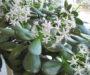 Vezme obyčejné kvasnice a smíchá je s vodou! Nejlepší domácí hnojivo pro pokojové rostliny – účinky velmi mile překvapí!