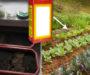 Tohle dokáže obyčejná jedlá soda! Osvědčené triky jak ji využít na Vaší zahradě – zbaví Vás mravenců i slimáků!