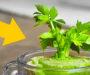 8 druhů zeleniny a bylinek, které si můžete pěstovat doma na parapetu – porostou Vám celý rok!