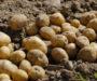 Geniální způsob jak pěstovat až 100 kg brambor na 1 metru čtverečním! Výsledky mile překvapí!