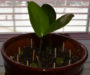 Vzala obyčejnou sirku a dala jí do květináče! Osvědčený trik jak využít sirky pro záchranu pokojových rostlin!