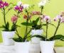Odkvetla Vám orchidej? 10 osvědčených triků jak jí rozkvést – pokvete Vám celý rok!
