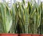 5 nejlepších rostlin které je dobré mít ve Vaší ložnici! Zlepšují spánek a čistí vzduch!