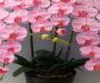 Odkvetla Vaše orchidej? Tajemství jak jí znovu rozkvést – pokvete Vám celý rok!